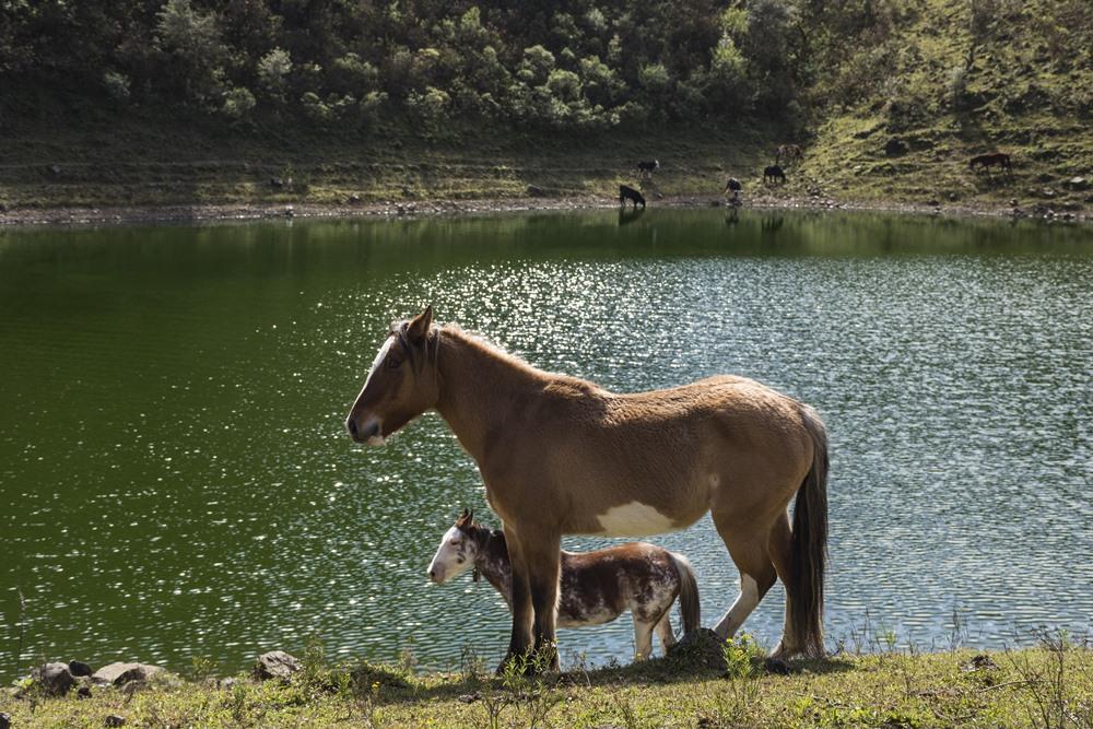 Lagunas de Yala Fauna