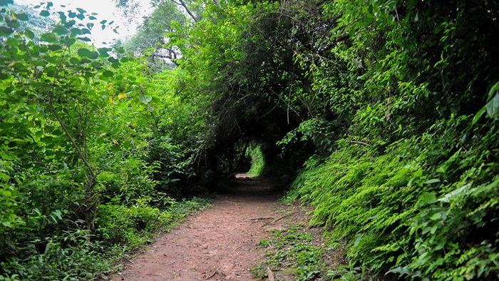 Parque Botánico Municipal «Barón Carlos María Schuel»