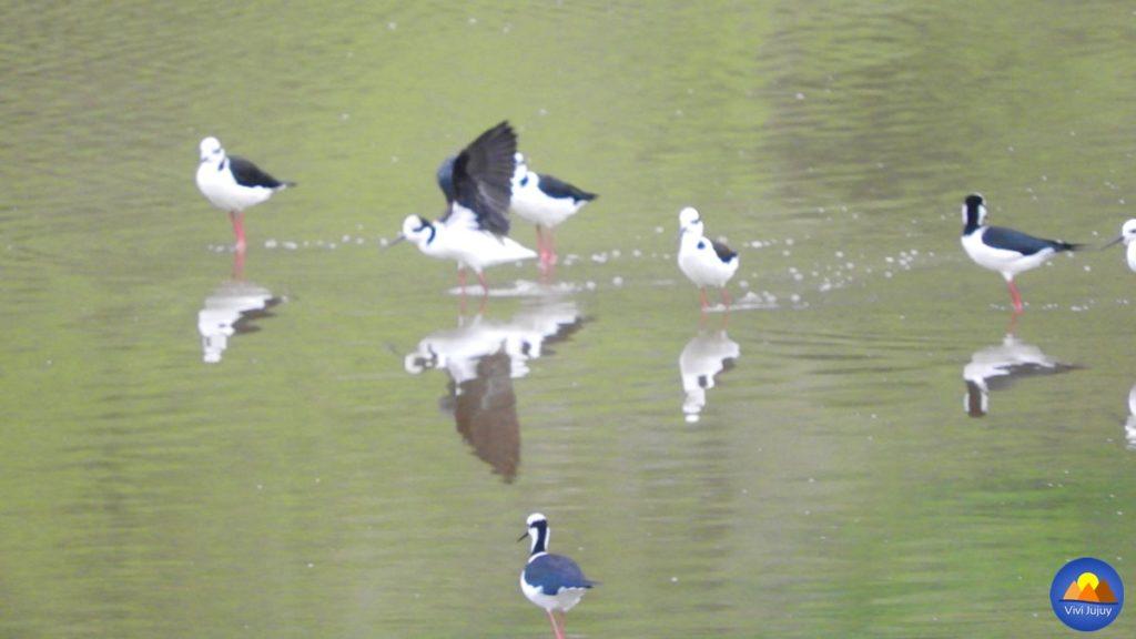Aves en la Laguna de Yala