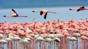 Flamencos Laguna de los Pozuelos