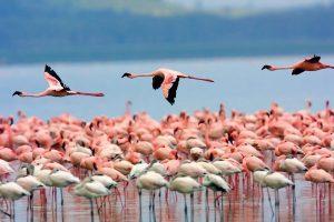 Flamencos Laguna de Pozuelos